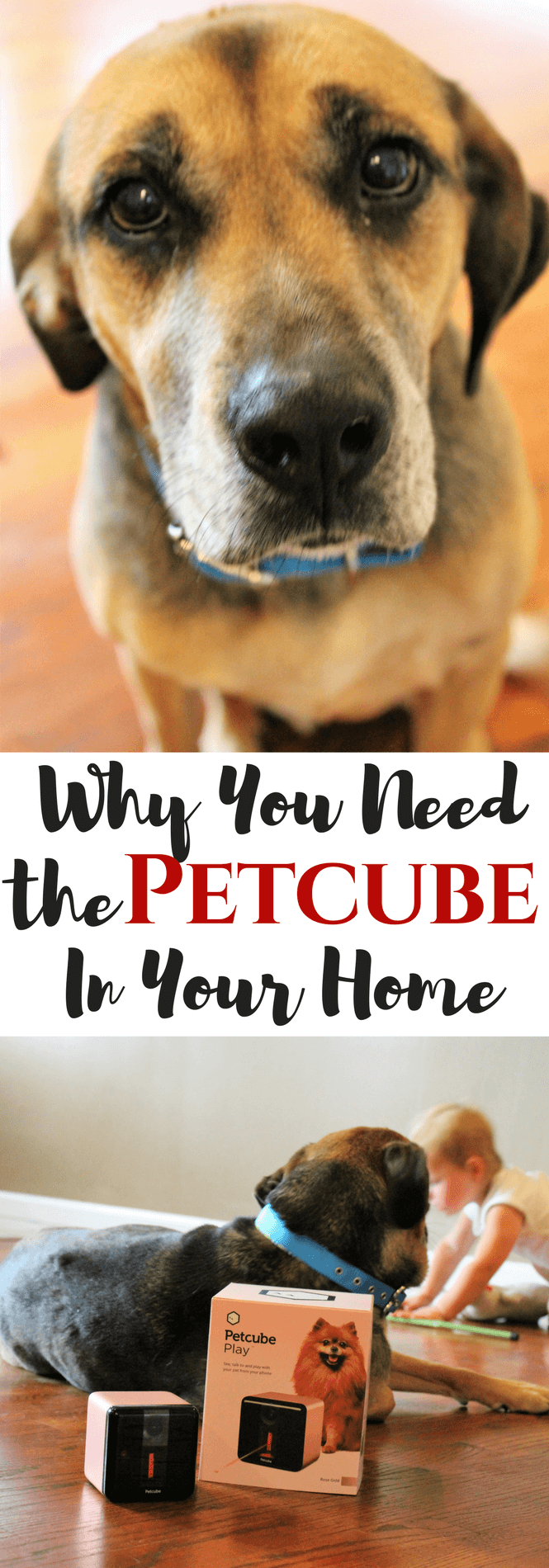 Why You Need the Petcube In Your Home, #petcube, #ad, pets