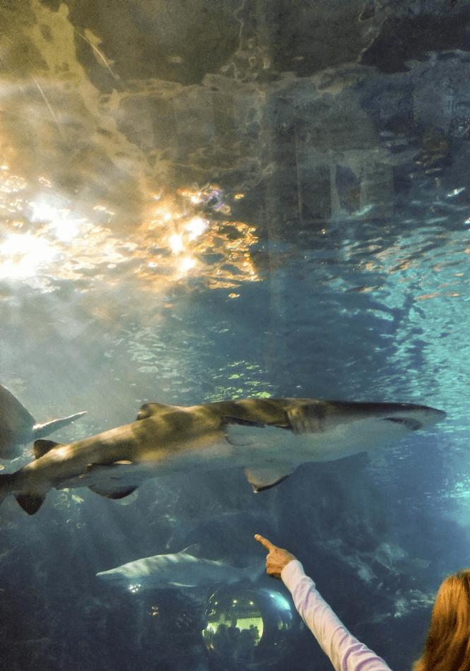 Newport Aquarium   Leggings 'N' Lattes