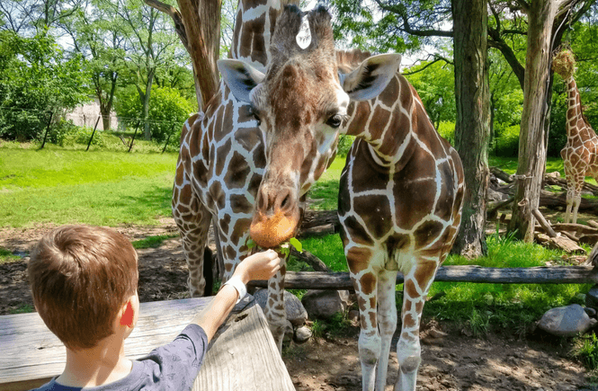 Indianapolis Zoo, Indy, Things to do in Indianapolis, Indiana travel